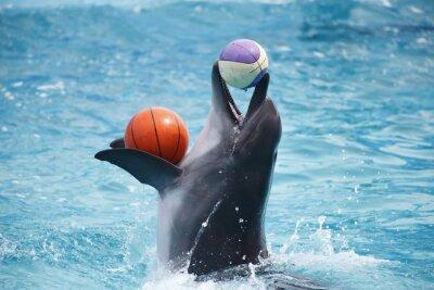 Nálepka roztomilé delfíny během projevu v delfináriu