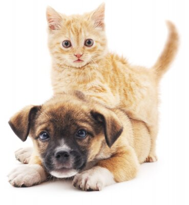 Nálepka Rred kotě štěně.