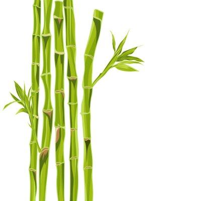Nálepka Ručně kreslená zelené bambusové bacground s prostorem pro text