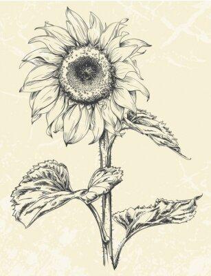 Nálepka Ručně malovaná slunečnice s listy ans vřeteno izolovaných na texturami pozadí