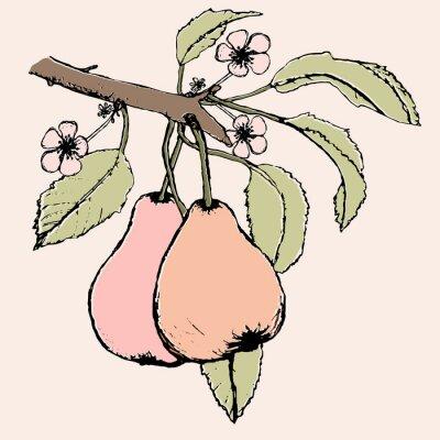 Nálepka Ručně malovaná větev s párem hrušky, květů a listů