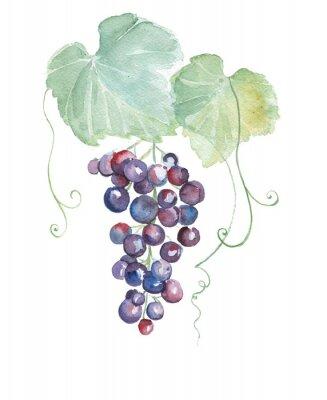 Nálepka Ruční tažené akvarel ilustrace modrých hroznů