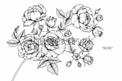 Nálepka Růže květiny, kreslení a skica s čárové grafiky na bílém pozadí.