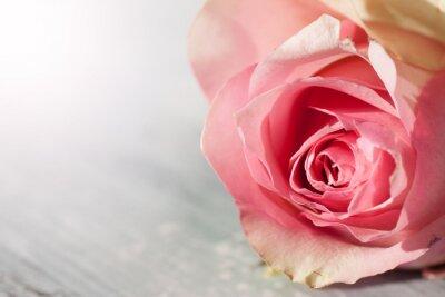 Nálepka Růže Zátiší