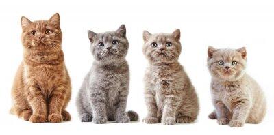 Nálepka Různé britské koťata