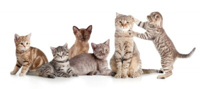 Nálepka Různé kočky skupina izolovaných