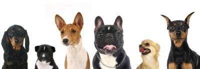 Nálepka Různé plemena malé psy