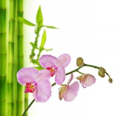 Nálepka růžové orchideje a bambusu - lázeňské pozadí