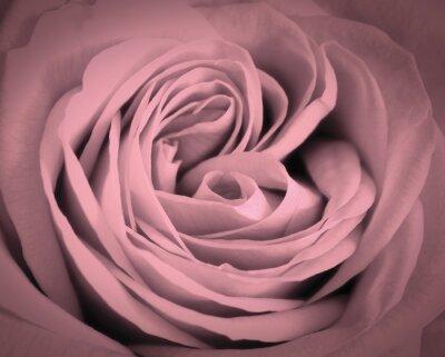 Nálepka Růžové růže zblízka pozadí. Romantická láska blahopřání