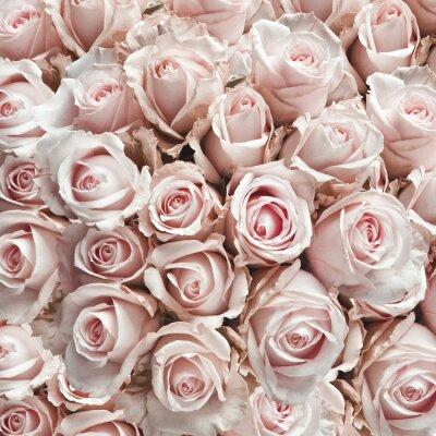 Nálepka Růžové vintage růže