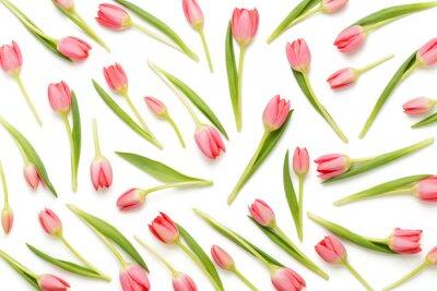 Nálepka Růžový Tulipán vzor na bílém bacjkground.