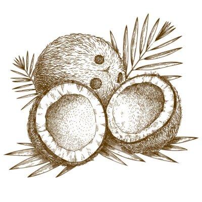 Nálepka rytí ilustrace kokosového a palmového listí