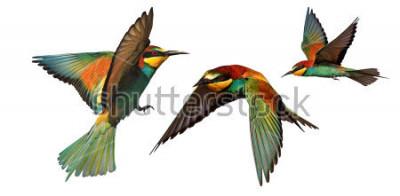 Nálepka sada barevných ptáků v letu izolovaných na bílém pozadí