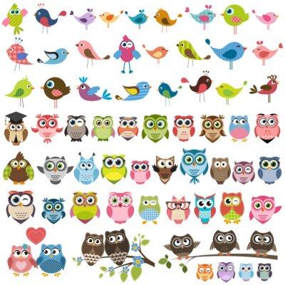 Nálepka Sada kreslených barevných ptáků a sov