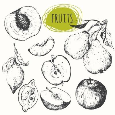 Nálepka Sada ručně tažené jablka, citronu, hrušky, broskve. Skici ovoce.