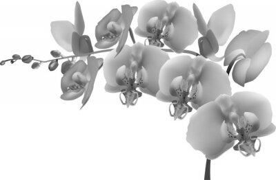 Nálepka šedá orchidejí větev na bílém pozadí
