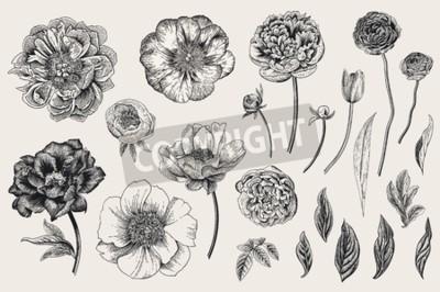 Nálepka Set of Spring flowers. Vintage vector botanical illustration. Black and white