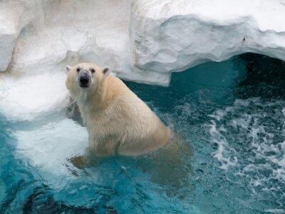 Nálepka Severní polární medvěd