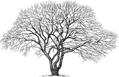 Nálepka silueta starého stromu