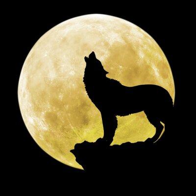 Nálepka Silueta vlka před měsícem