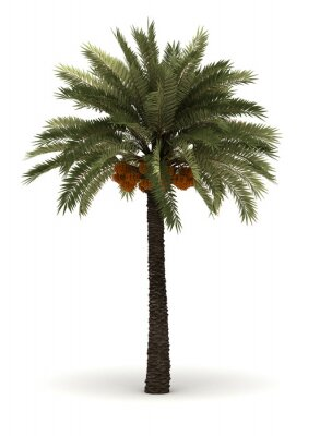 Nálepka Single Palm Tree