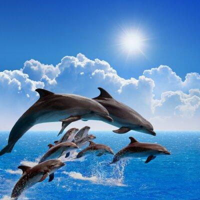 Nálepka Skákání delfínů