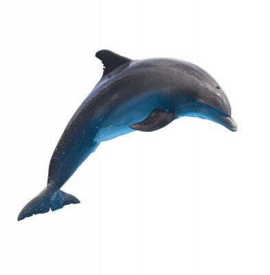 Nálepka skákání delfínů na bílém