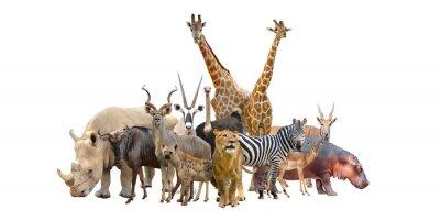 Nálepka skupina afriky zvířat