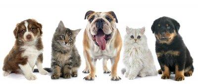 Nálepka skupina domácí zvíře