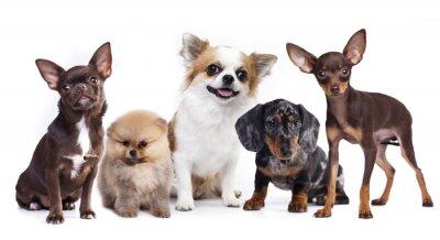 Nálepka skupina drobných dekorativních psích společníků