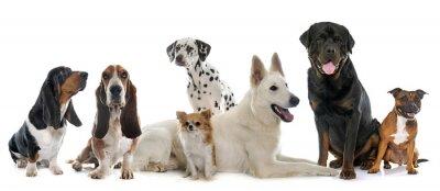 Nálepka skupina psů
