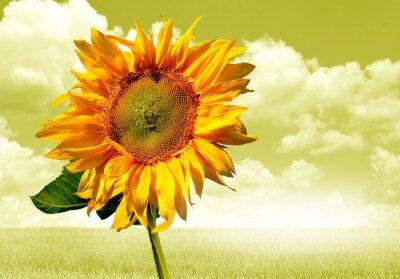 Nálepka słonecznik