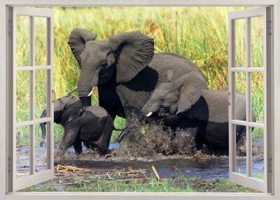 Nálepka sloni