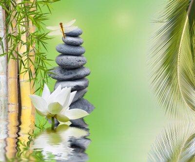 Nálepka Složení Bambou palmier Galets zen aquatique