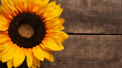 Nálepka Slunečnice na dřevo