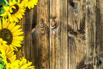 Nálepka Slunečnice na rustikální dřevěné pozadí. Květiny pozadí s kopií vesmíru