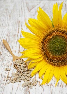 Nálepka Slunečnice se semeny