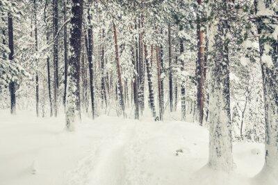 Nálepka Sněžení v zimním lese.