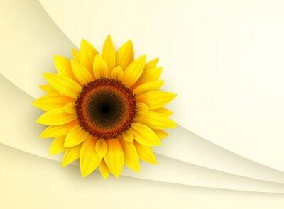 Nálepka Souvislosti s slunečnice,