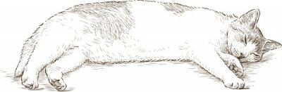 Nálepka spící kočka