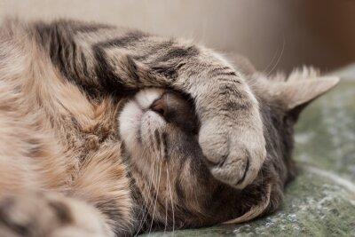 Nálepka spící kočku