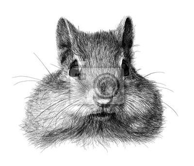 squirrel sketch illustration, Ink black and white animal illustration, Animal illustration.