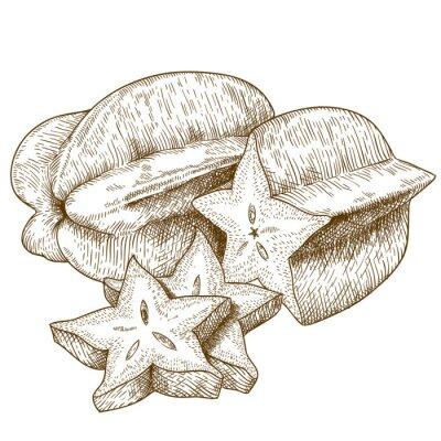 Nálepka starožitných rytí ilustrace karambol