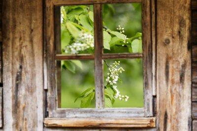 Nálepka Starý dřevěný rám okna, pružina, kvetoucí stromy.