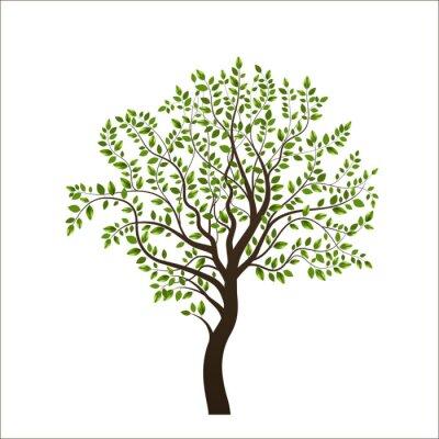 Nálepka Strom na bílém pozadí