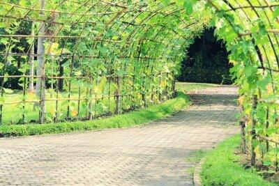 Nálepka Strom tunel rostlin Úhlová luffa