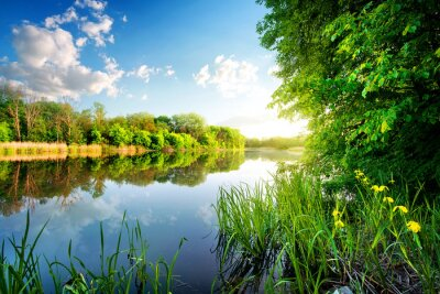 Nálepka Stromy podle klidné řeky