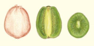 Nálepka Studi di Frutta: kiwi
