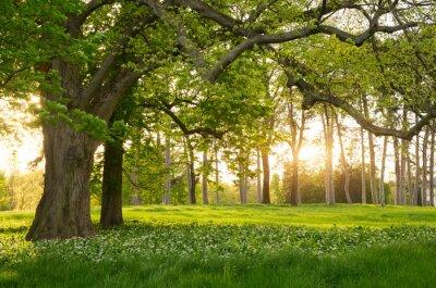 Nálepka Sunlight in the green forest springtime