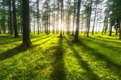 Nálepka sunny forest